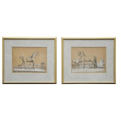 18th Century Etchings of Le Neopoltain and Cheval Anglois Horses - Set of 2