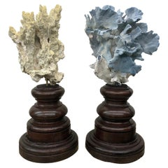 Pair of 18th Century Italian Base with Grand Specimen Coral Sculptures