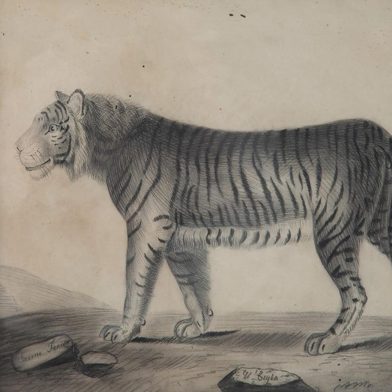 Spanish Pair of 19th Century Etchings of a Lion and a Tiger For Sale
