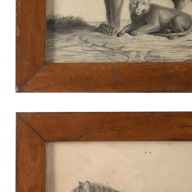 Pair of 19th Century Etchings of a Lion and a Tiger In Good Condition For Sale In Tetbury, Gloucestershire