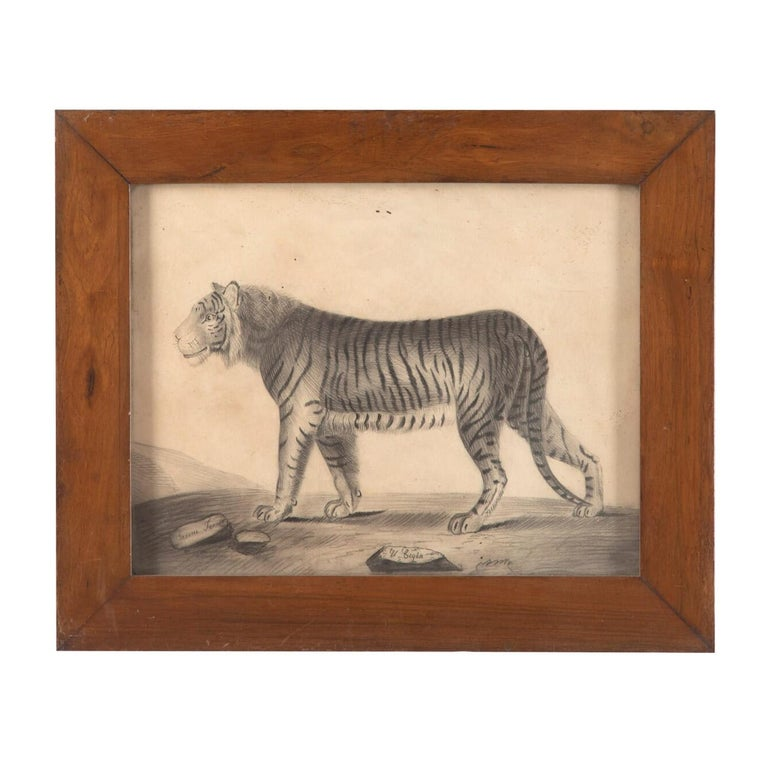 Paper Pair of 19th Century Etchings of a Lion and a Tiger For Sale