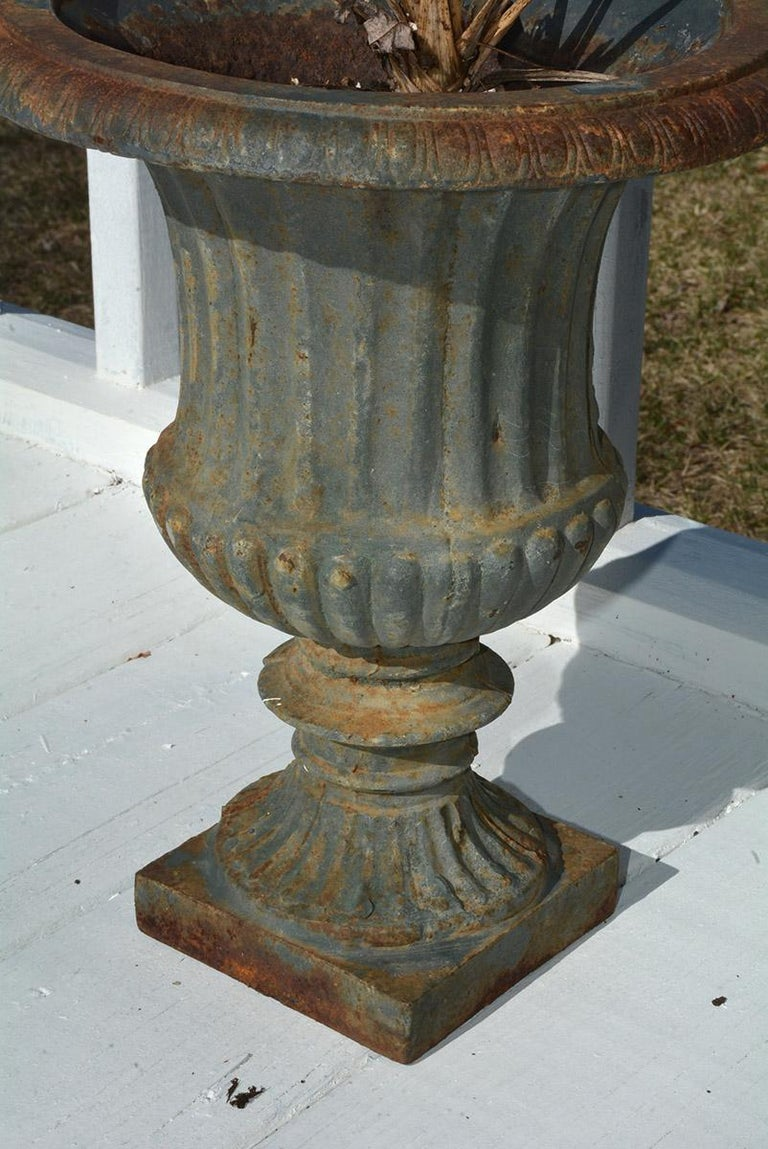 Pair of 19th Century French Cast Iron Urns In Good Condition For Sale In Great Barrington, MA