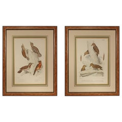 Pair of 19th Century Ornithological Color Prints