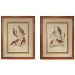 Pair of 19th Century Ornithological Color Prints of European Birds