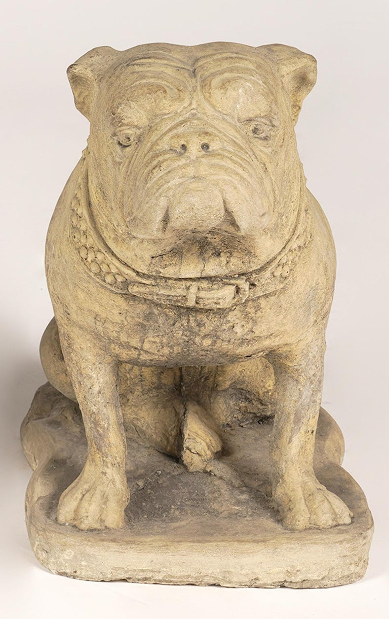 Pair of 20th century cast cement English Bulldogs. Very good condition made for outside or indoor use.