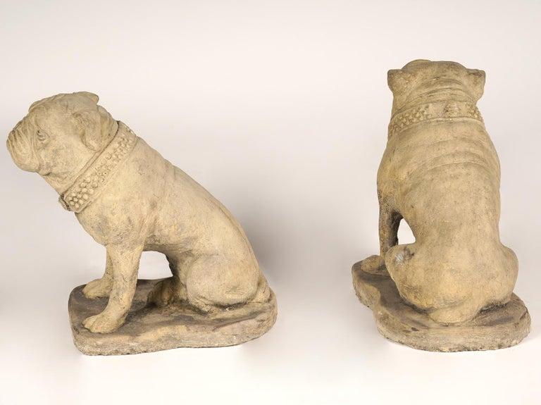 Pair of 20th Century Cast Cement English Bulldogs 1