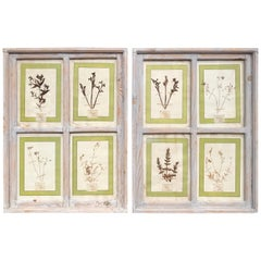 Pair of 21st Century Italian Dried Botanical Flowers in Painted Frames