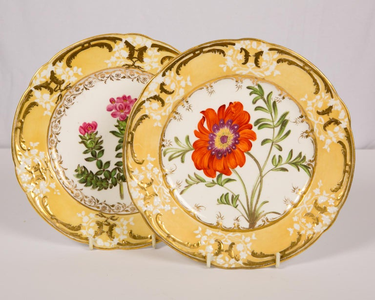 We are pleased to offer this pair of antique dishes with a single hand-painted flower at the centre. The flower is complemented by a buttery yellow border with ornate gold scrolling and delicate white floral wreaths. Each of the pair of flowers has
