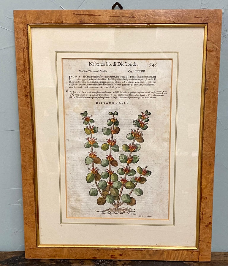 Pair of exceptional antique English botany prints, hand colored in Italian burl olive wood and gold leaf frames. 4 additional smaller prints available, sold separately.