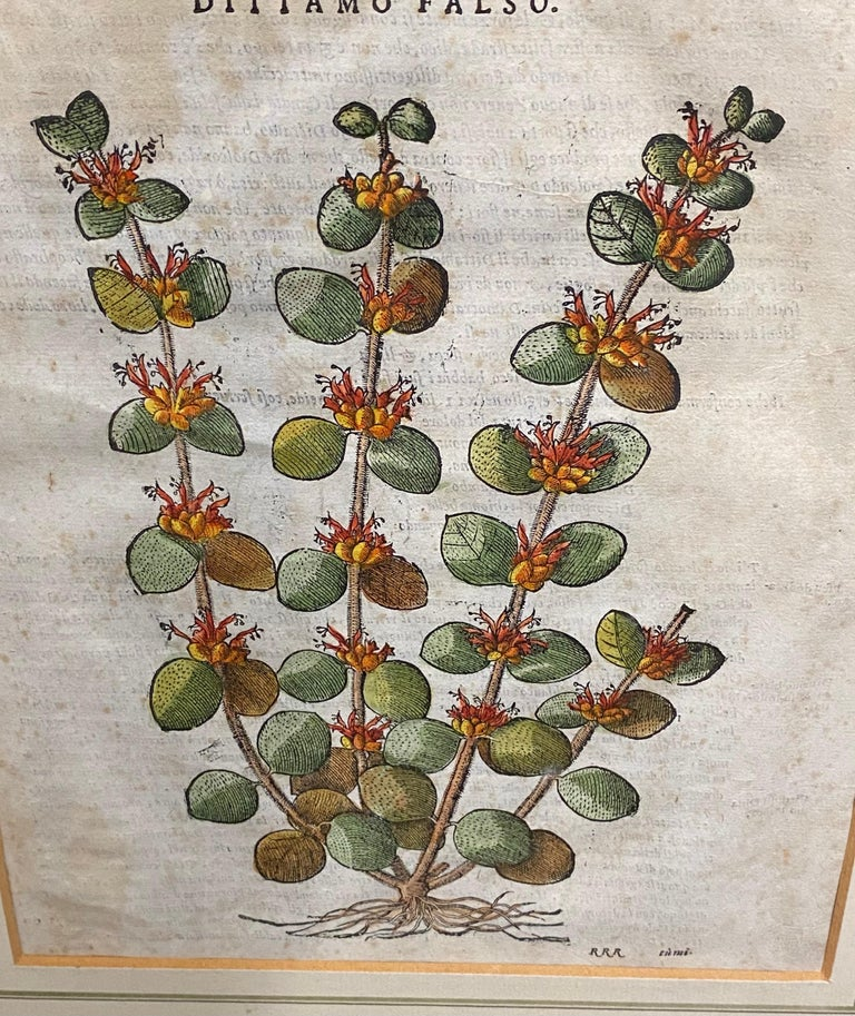 Pair of Antique English Botanical Prints In Good Condition For Sale In Great Barrington, MA