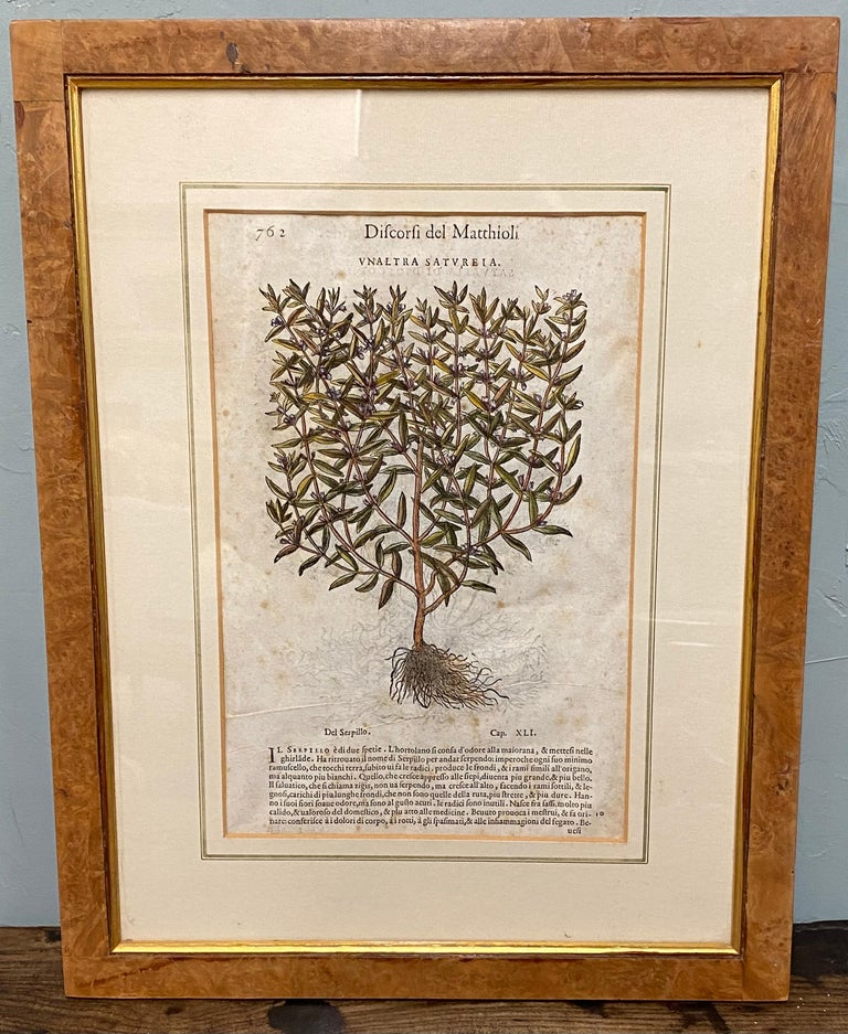Pair of Antique English Botanical Prints For Sale 1