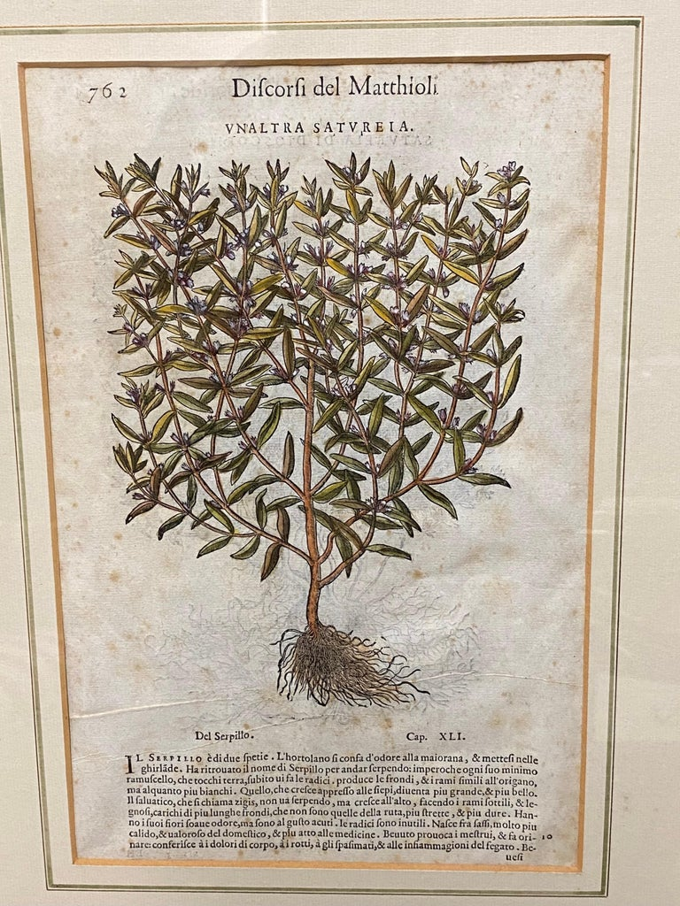 Pair of Antique English Botanical Prints For Sale 2