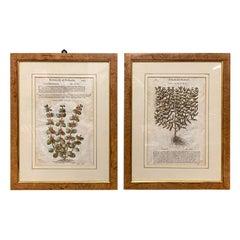 Pair of Antique English Botanical Prints