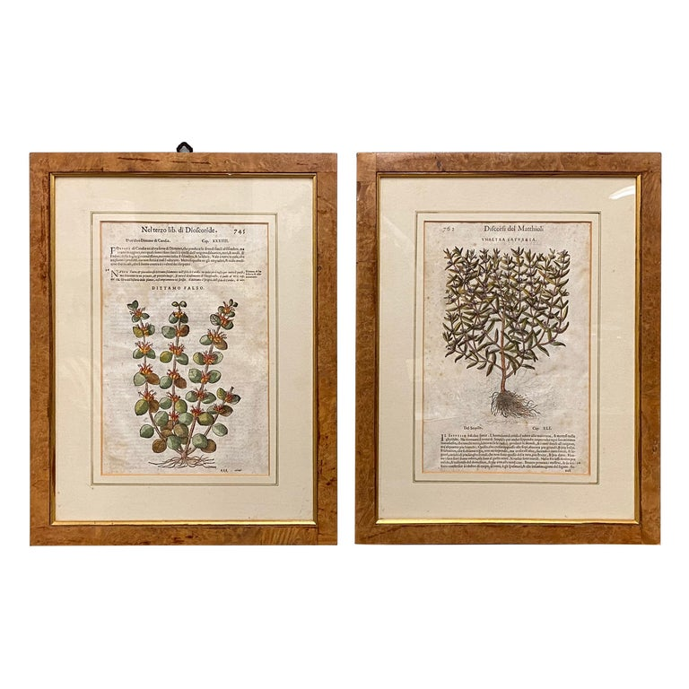 Pair of Antique English Botanical Prints For Sale