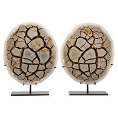 Pair of Belgium Calcite Septarian Nodule Natural Form on Metallic Base