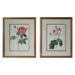 Pair of Botanical Rose Prints after Pierre-Joseph Redoute