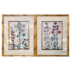 Pair of Botanicals Chelsea House Labels on Reverse. Fine Frames