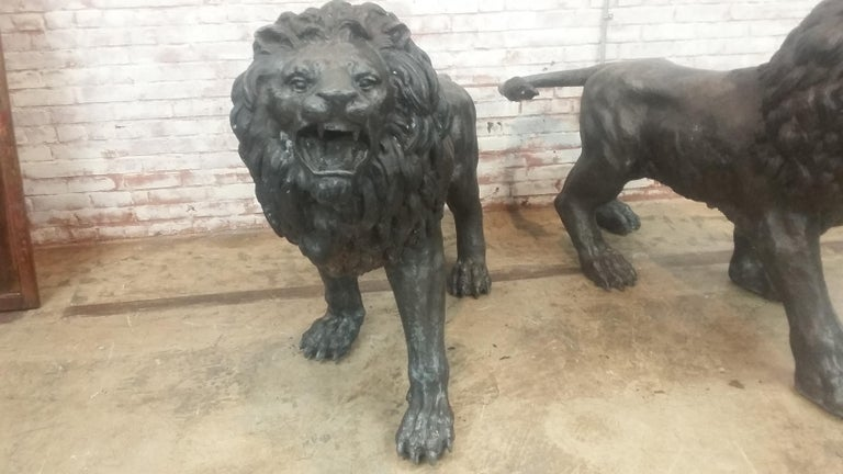 Pair of bronze entranceway lions. Made in Thailand (late 20th century). Beautiful details and patina. Heavy but not impossible to move etc. Great pair of classic style lions to welcome visitors to your home or company.