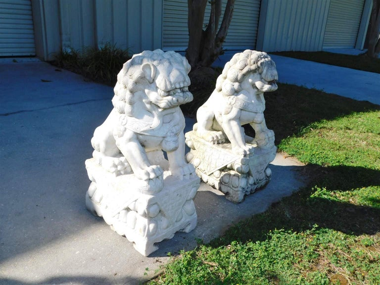 Pair of hand carved Chinese marble Foo dogs sitting on rectangular decorative carved plinths. Early 20th century.