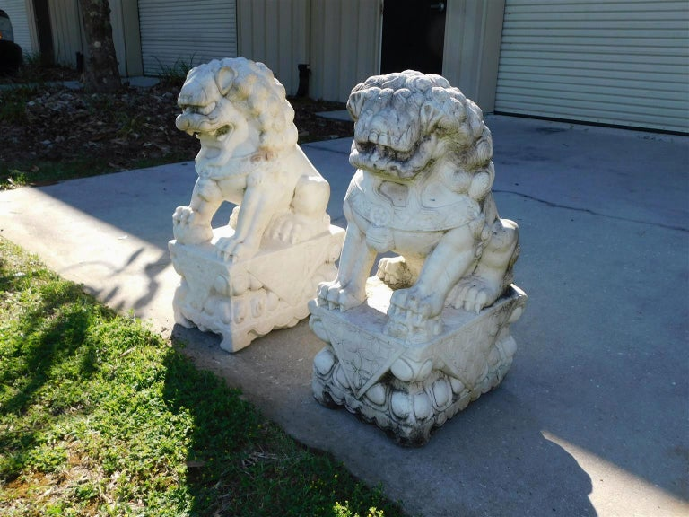 Chinese Export Pair of Carved Chinese Marble Foo Dogs Sitting on Decorative Plinths, 20th Cent For Sale