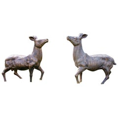 Pair of Cast Iron Deer, Beautifully Modeled in the 18th Century Style