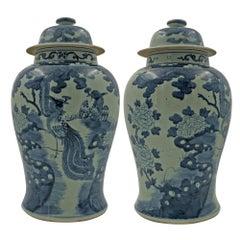 Pair of Chinese Pheasant Temple Jars
