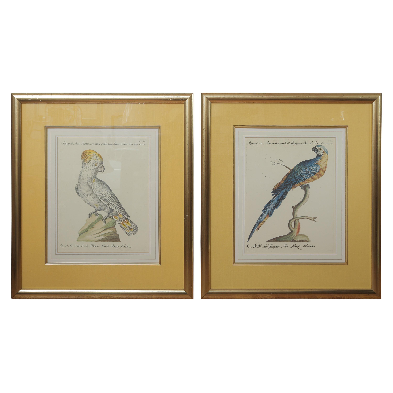 Pair of Colored Bird Engravings