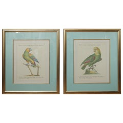 Pair of Colored Bird Engravings