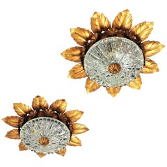 Pair of Crown Flower Flushmounts in Gilt Iron with Pressed Glass Shades