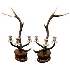 Pair of Dark Red Deer Antler Candlesticks