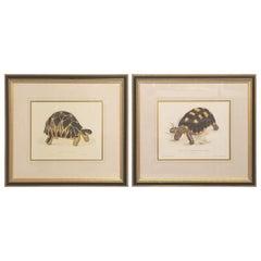 Pair of Decorative Tortoise Prints