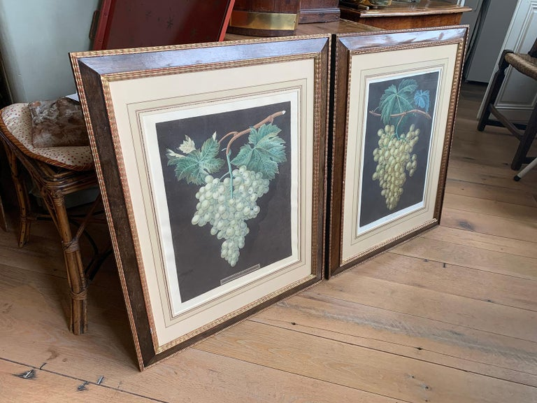 Pair of English Hand Colored Aquatint Engravings of Grapes by George Brookshaw In Good Condition For Sale In Atlanta, GA