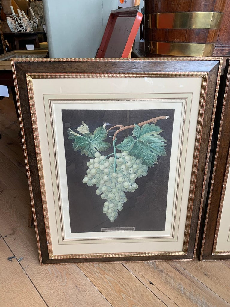 19th Century Pair of English Hand Colored Aquatint Engravings of Grapes by George Brookshaw For Sale