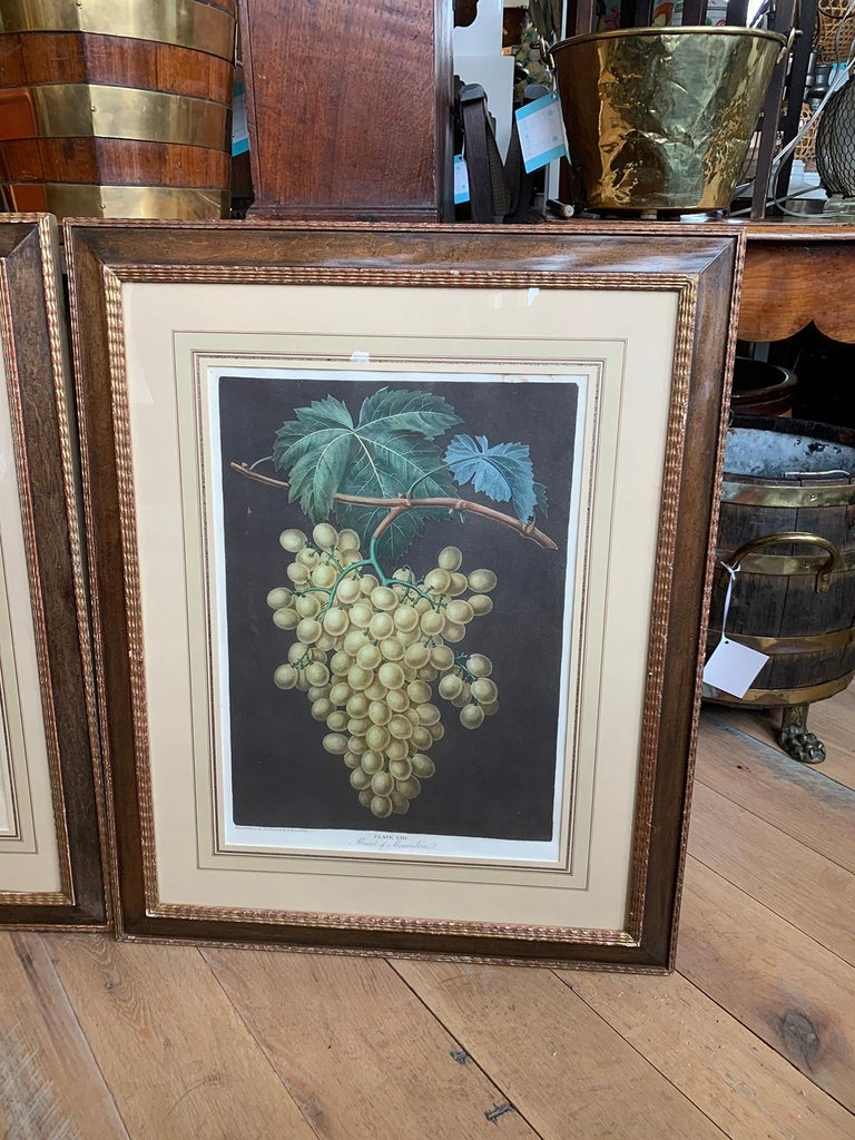 Paper Pair of English Hand Colored Aquatint Engravings of Grapes by George Brookshaw For Sale