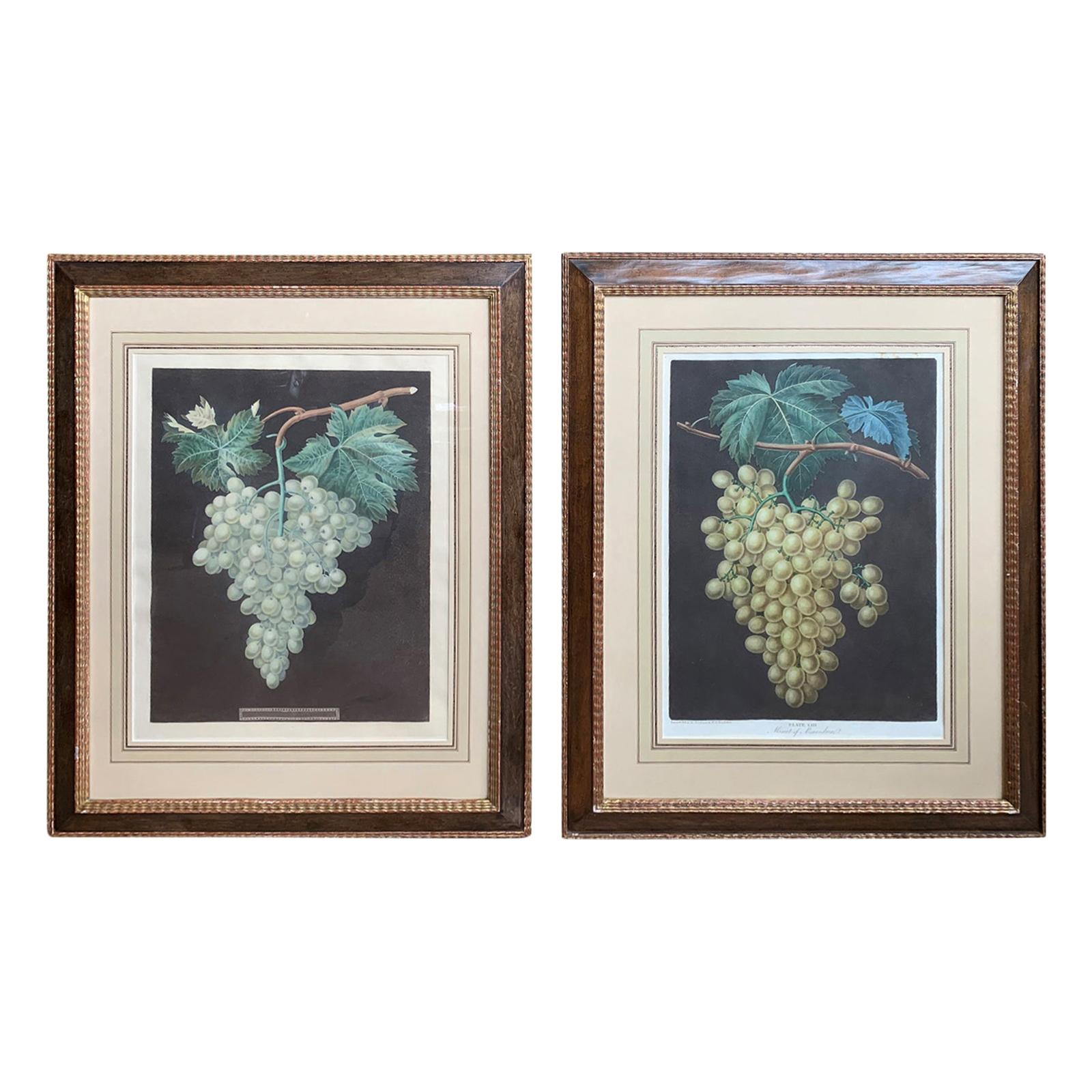 Pair of English Hand Colored Aquatint Engravings of Grapes by George Brookshaw
