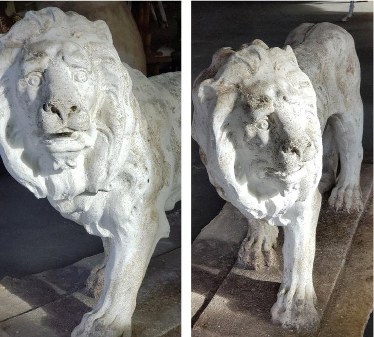 This pair continues to impress with their defined muscle structure, heavy manes, well defined feet and tail. Backbone and rib cage defined with beautiful facial features and expression. Generous size. (Measurement is excluding cement base.).