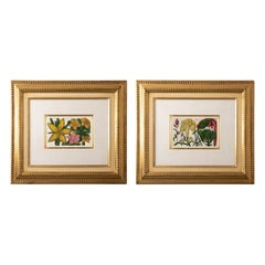 Pair of Framed Hand Colored Botanical Engravings by Filippo Area