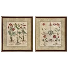 Pair of Framed, Hand Painted Botanical Engravings by Basilius Besler