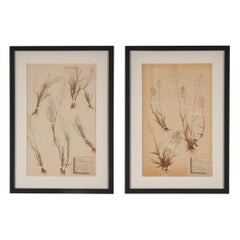 Pair of Framed Pressed Botanical, Central Africa Republic, 1970s