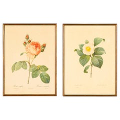 Pair of Frames with Botanical Prints from the Paintings of Redoute, Early 1900s