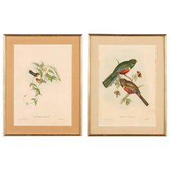 Pair of Frames with Ornithology Lithograph Prints, England, 1940s