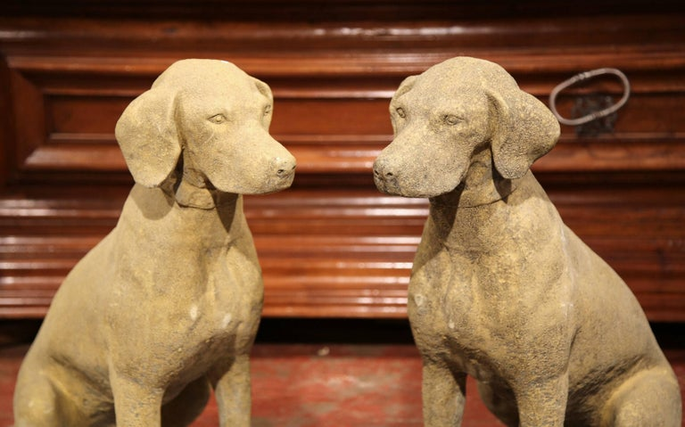 Place this fine pair of Classic dog sculptures by your front door! Crafted in France, circa 2010, the stately, vintage Labradors with collar are set on a flat base and sitting on their back legs. The large sculpted canines have a verdigris patina