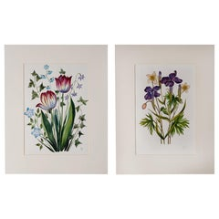 """Pair of French Watercolors """"Flowers"""""""