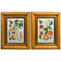 Pair of Hand Colored Prints of Various Fruits