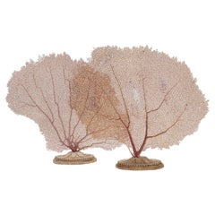 Pair of Horny Coral Branches, Italy, 1880