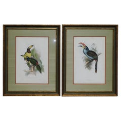 Pair of John Gould Hand Colored Framed Lithographs Family of Toucans, Circa 1840