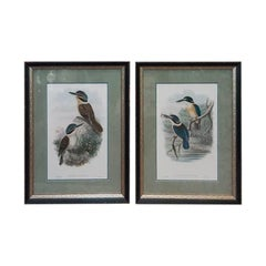 Pair of John Gould Hand Colored Kingfisher Bird Lithographs