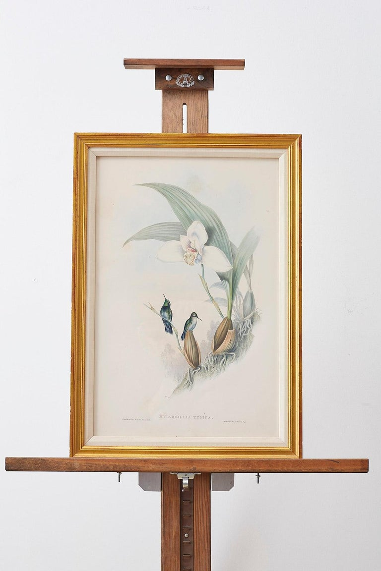 Pair of John Gould Ornithological Colored Hummingbird Prints For Sale 7
