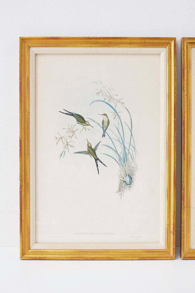 Pair of John Gould Ornithological Colored Hummingbird Prints In Good Condition For Sale In Oakland, CA