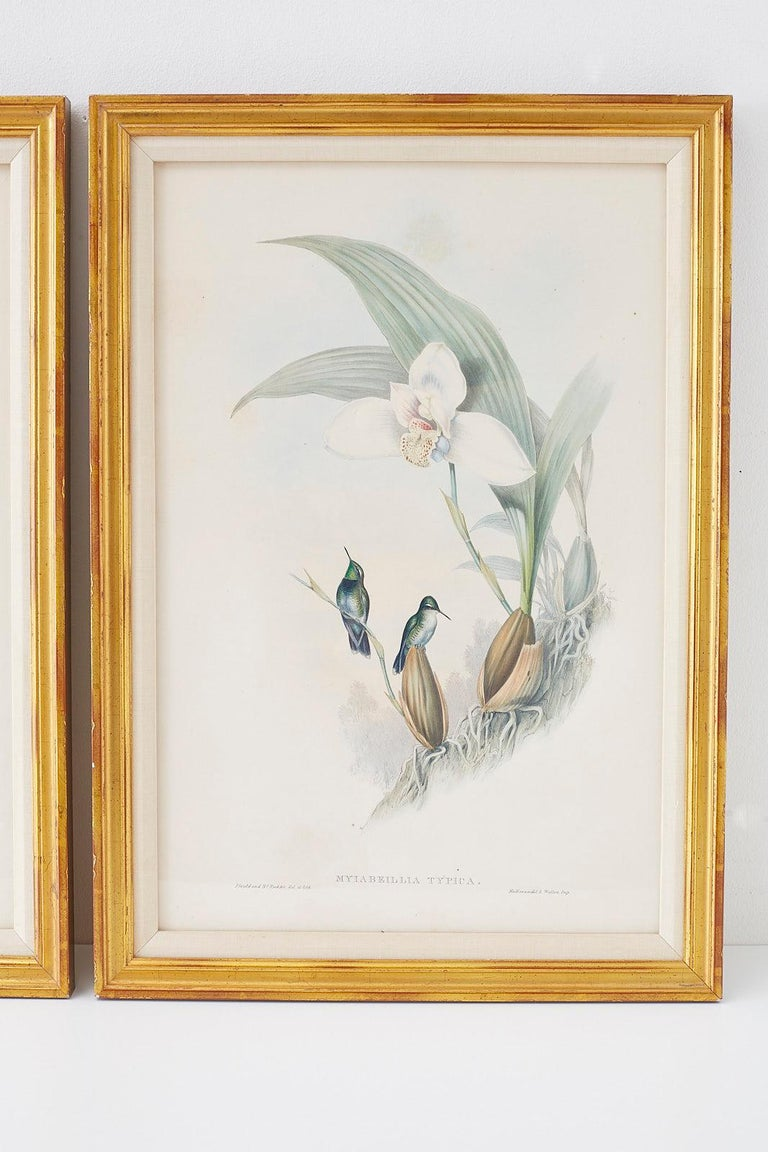 Pair of John Gould Ornithological Colored Hummingbird Prints For Sale 1